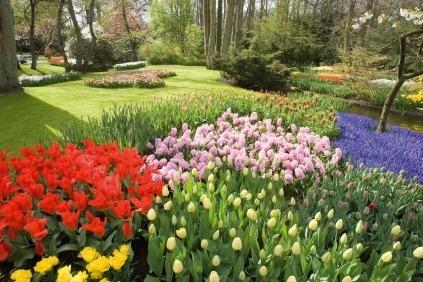 Velkommen på blomsterparaderejse til Holland