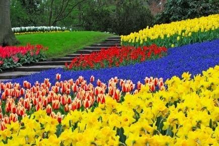 Holland nye Europas forårsferieland
