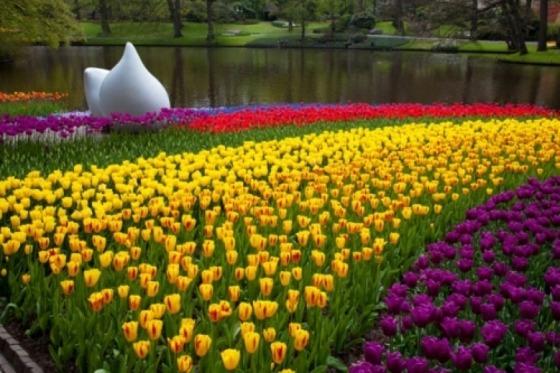 Forår i Holland er pragtfuld