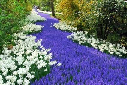 Velkommen til det smukke, blomstrende Holland
